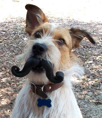 Mustache Dog Toy Petco