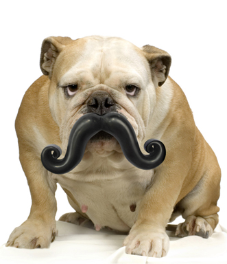 Humunga Stache Moody Pet Wag Purr Laugh